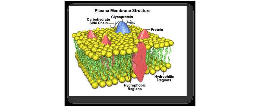 زیست سلولی و مولکولی